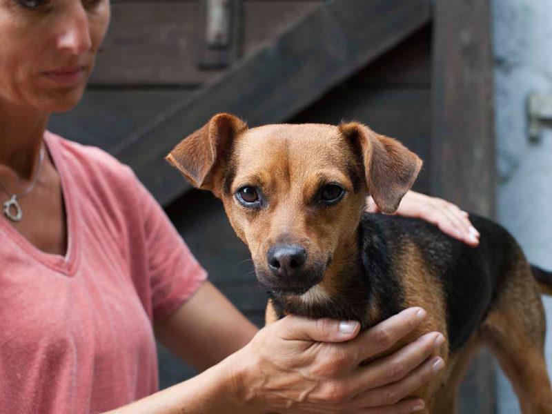 ATMASA1 – Atelier de stretching et massage canin – Initiation