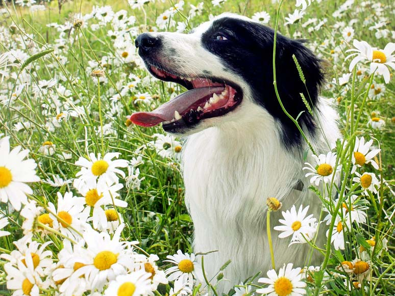 ATFDBA1 – Atelier Fleurs de Bach pour vos animaux
