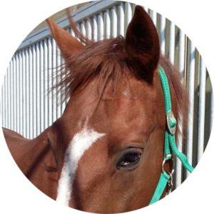 Salieri_cheval