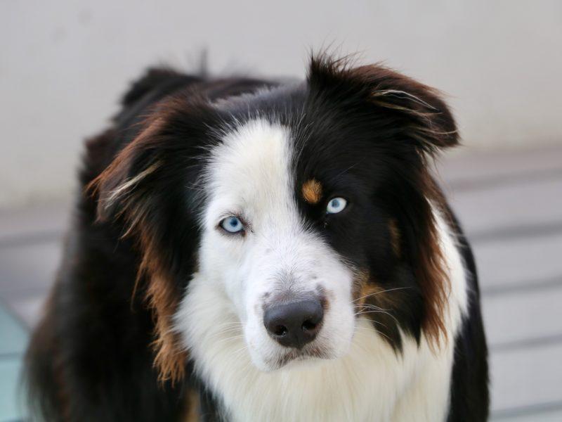 ATCOM1 – Introduction à la communication intuitive avec les animaux