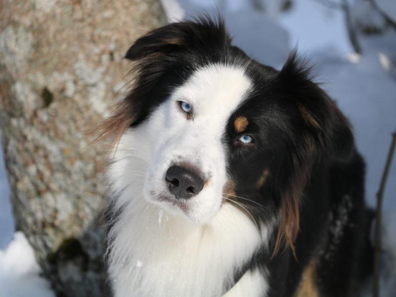 ATCOM1 – Introduction à la communication intuitive avec les animaux en ligne